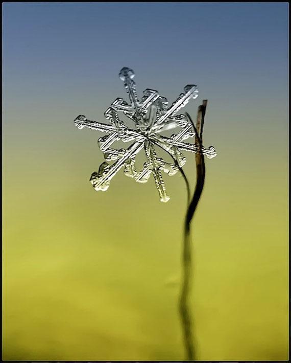 Autors: aisse Sniegpārsliņas