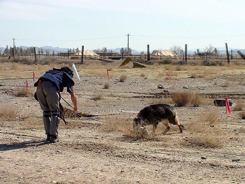Kāds britu suns Afganistānā... Autors: HotAsFire Visvisādi fakti.