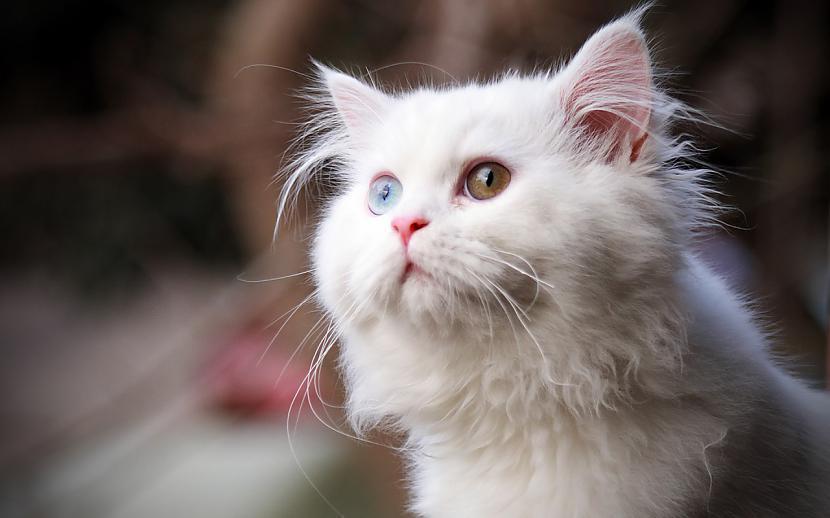 Noslēpums ir tajā ka kaķis... Autors: Raziels Par ko kaķi zina, bet nerunā