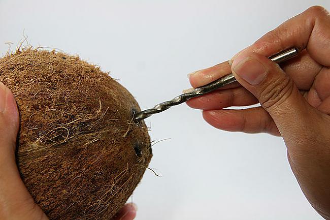 Pie vislielākās quotacsquot... Autors: plunkš Kā iegūt kokosrieksta skaidiņas?