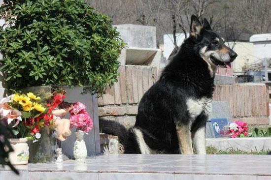 Pēc tam kad 2006 gadā nomira... Autors: Kačuks123 Pārsteidzoši stāsti par suņiem