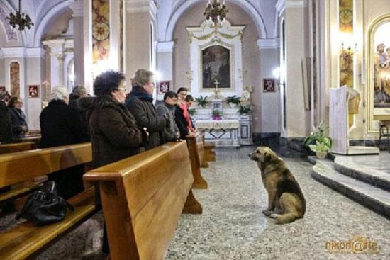 Reiz itāliete Marija... Autors: Kačuks123 Pārsteidzoši stāsti par suņiem