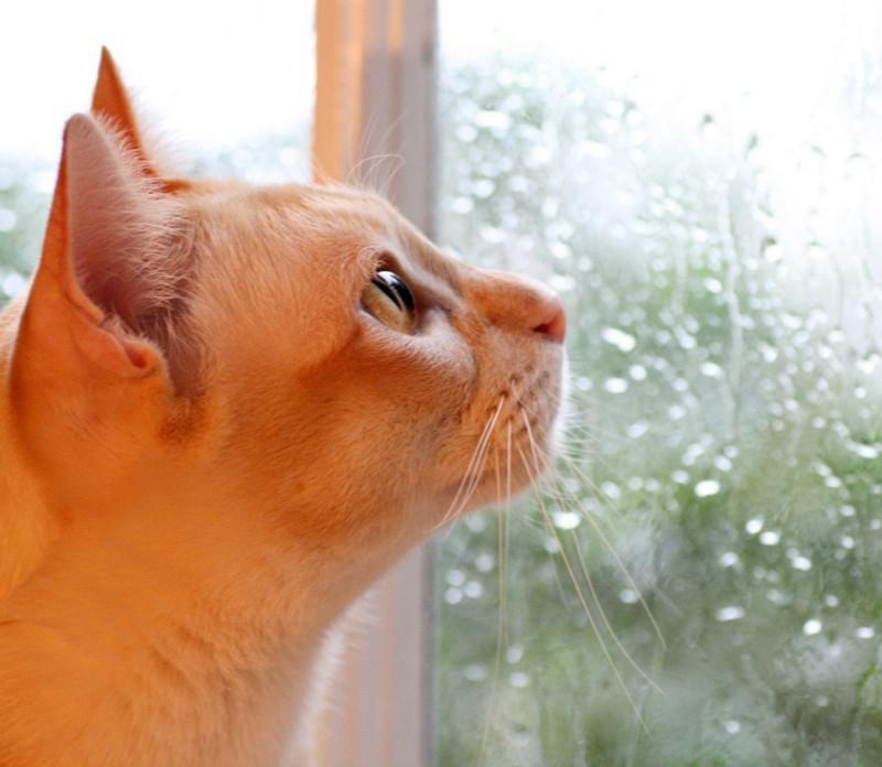 Картинки опять дождь прикольные, картинках днем